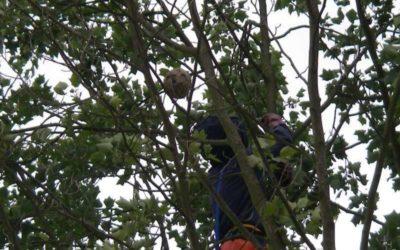 Lombia : Stop Guêpes et Frelons